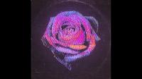 Inner Wave - Rose