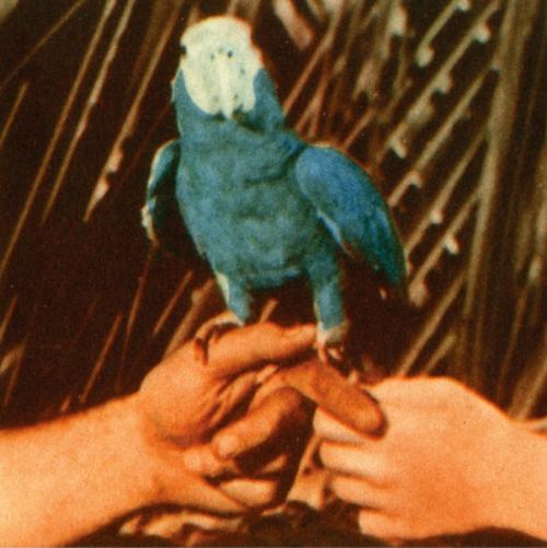 Andrew Bird - Capsized